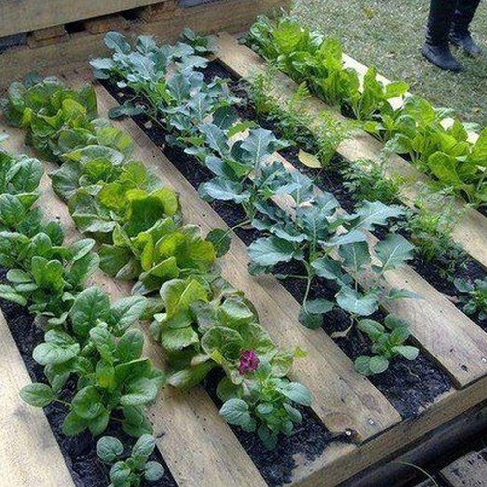 Affordable Backyard Vegetable Garden Designs Ideas 55: Affordable Backyard Vegetable Garden Designs Ideas 06