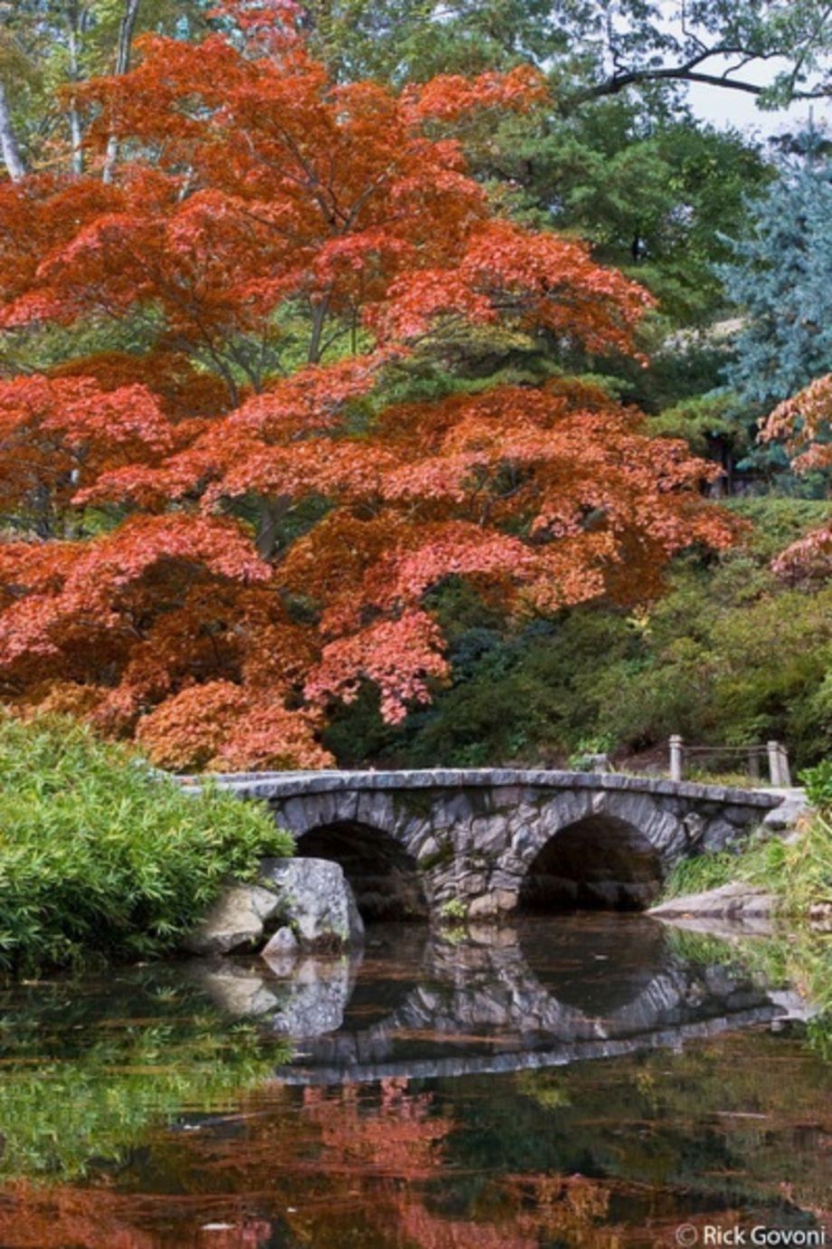 28 Japanese Garden Design Ideas To Style Up Your Backyard: Stunning Japanese Garden Ideas Plants You Will Love 33