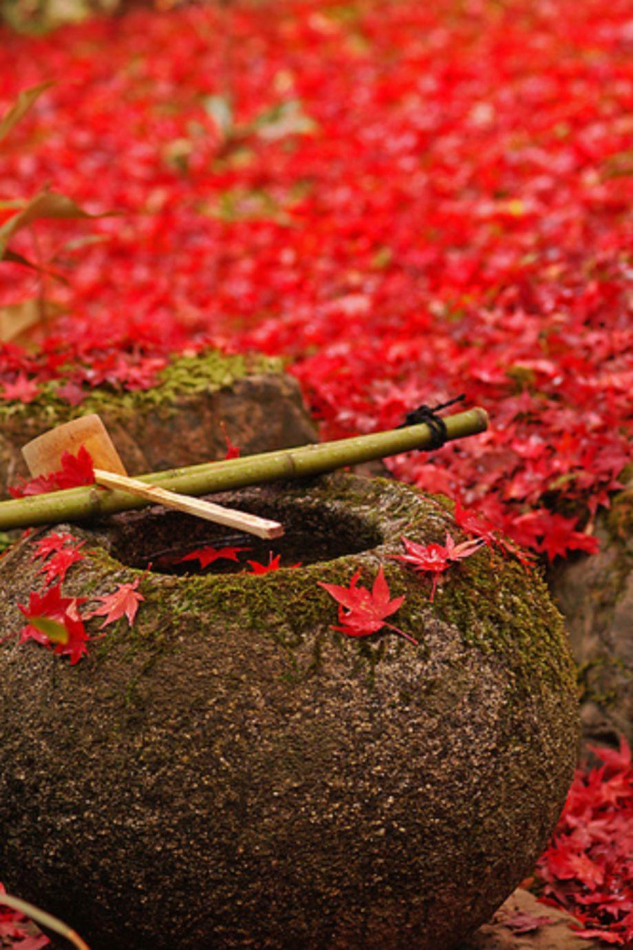 28 Japanese Garden Design Ideas To Style Up Your Backyard: Stunning Japanese Garden Ideas Plants You Will Love 37