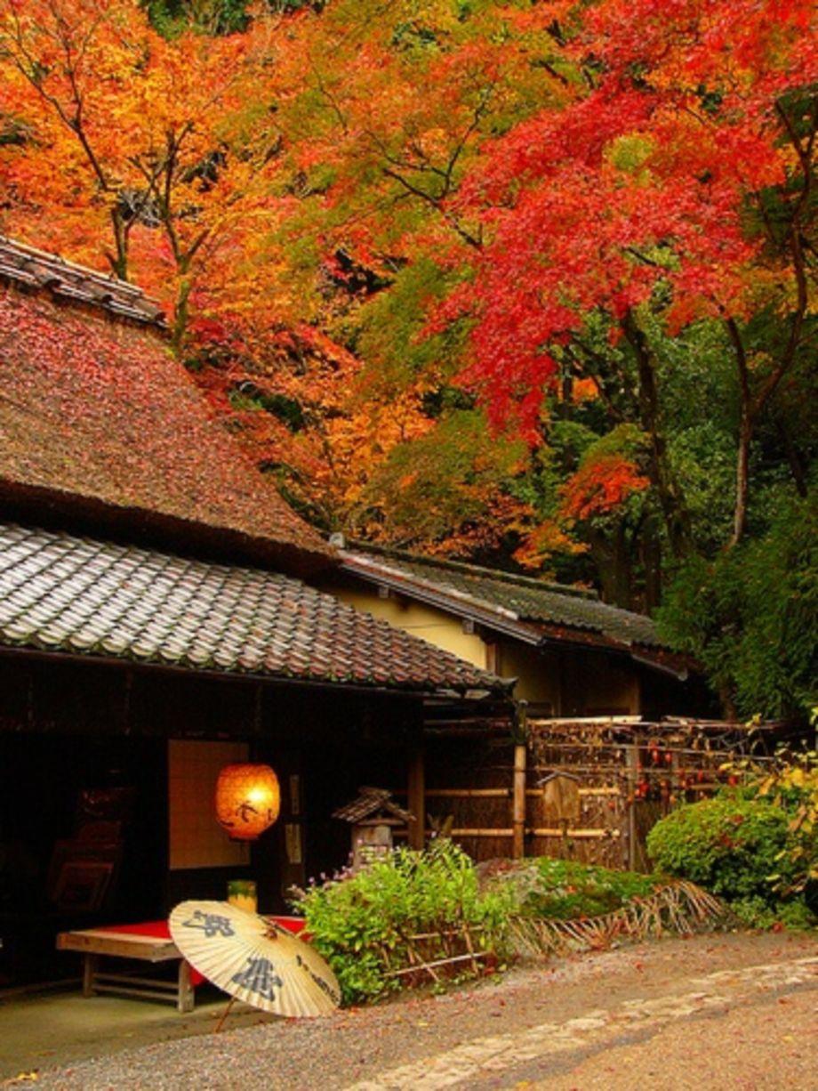 28 Japanese Garden Design Ideas To Style Up Your Backyard: Stunning Japanese Garden Ideas Plants You Will Love 43