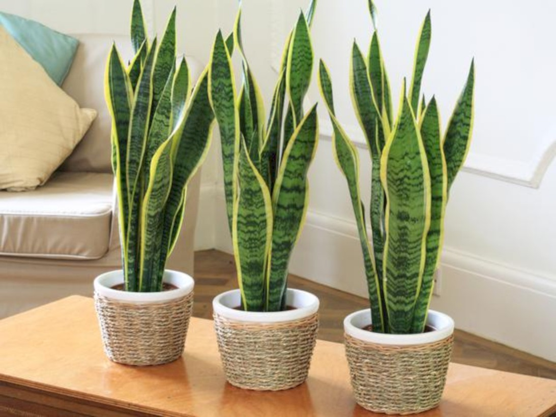 Living Room Plant. Stunning indoor plants ideas for your living room and bedroom 15 42 Indoor Plants Ideas For Your Living Room And Bedroom