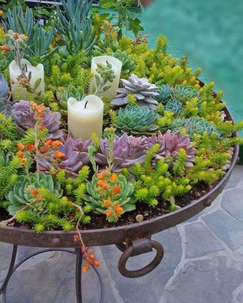 822 1024 in 46 creative diy indoor succulent garden ideas - Indoor Succulent Garden