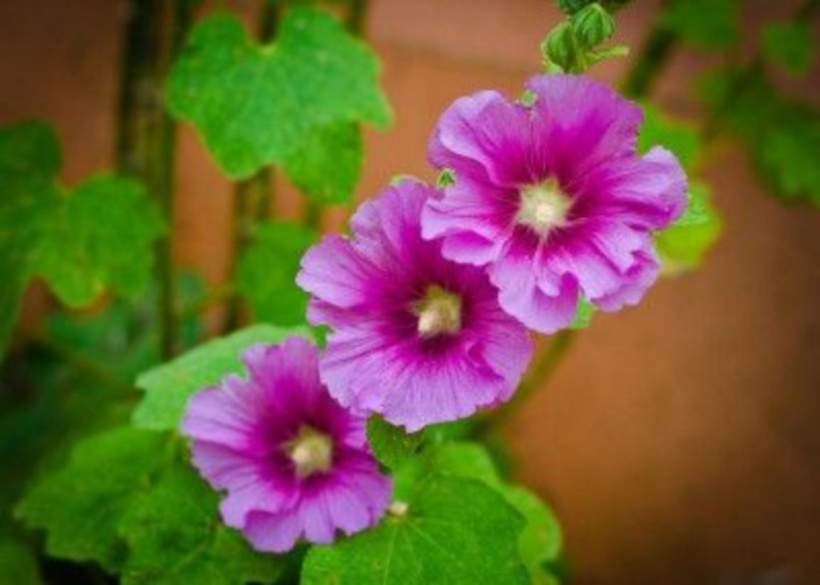 Impressive fall flowers to plant in your garden 55